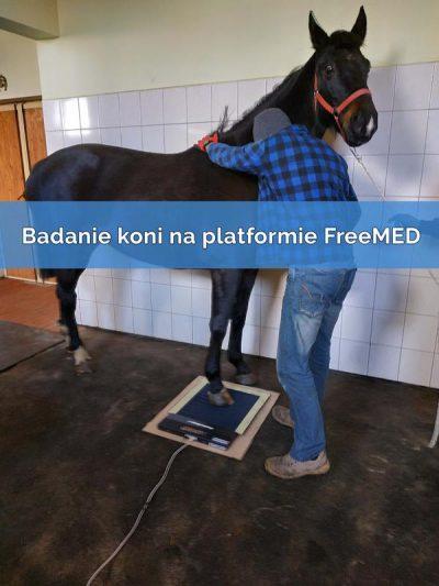 Badanie-koni-na-platformie-FreeMED